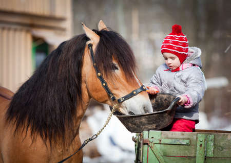 pony girl: Child feeding a horse, sitting on a cart in the winter
