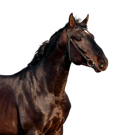cabeza de caballo: Cabeza de caballo de Brown aislado en el fondo negro
