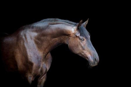 Cavallo nero isolato su sfondo nero Archivio Fotografico - 23477586