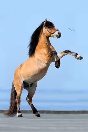 Rearing horse on blue background photo