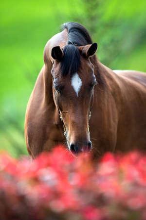 Testa di cavallo di fronte a sfondo verde Archivio Fotografico