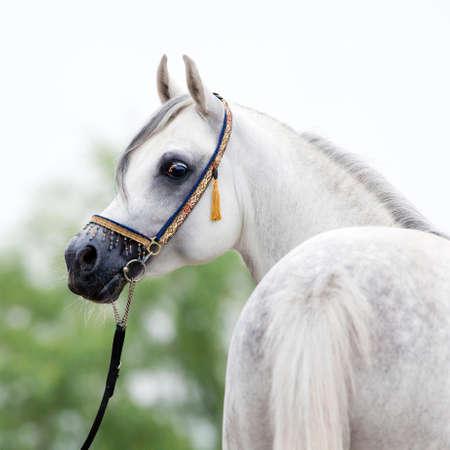 paardenhoofd: Wit paard hoofd, portret Stockfoto