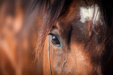 Horse eye close up Banque d'images