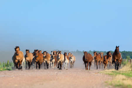 Herd of horses and foals runs on the road photo