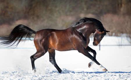 말 속에서 뛰어 다니는 말 스톡 콘텐츠 - 32096814