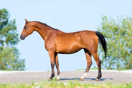 conformation: Bah�a caballo de pie en el cielo azul, la conformaci�n.