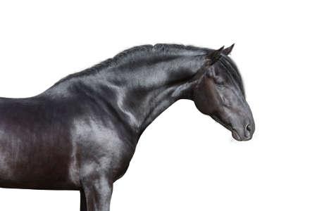 Zwart paard portret op een witte achtergrond, geïsoleerd. Stockfoto
