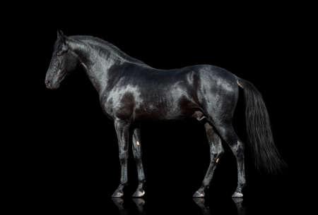 Schwarzes Pferd auf schwarzem Hintergrund isoliert Standard-Bild - 36573739