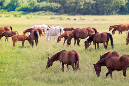 Herd of horses in pasture outdoor