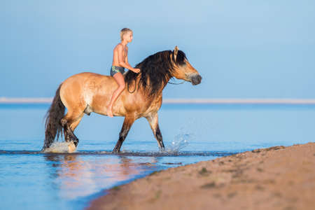 The boy riding a horse in the sea. Young rider on horse swim in water in sunset. Big horse with child walking on blue background. Stock Photo