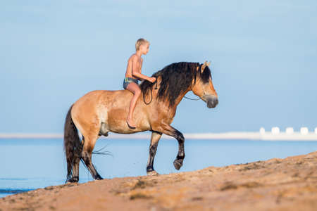 A boy ride a horse on the beach. Young child on heavy draft horse walking on blue background in summertime. Stock Photo