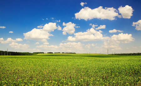 Green field, trees and blue sky with clouds  in sunny summer day.