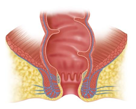 anal: anal rectal