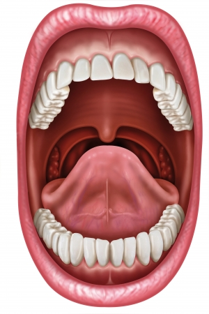 arteries: Anatomy of the mouth