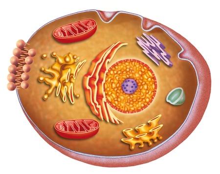 hormonas: estructura celular Foto de archivo