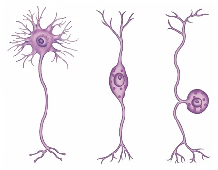 types of neurons Stock Photo