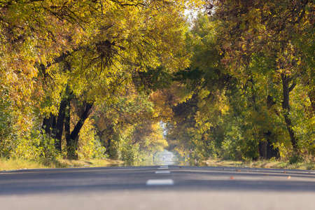 Autumn Fall Road landscape - Real trees tunnel, beautiful autumnal colors