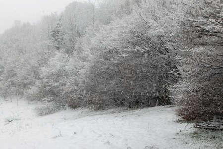 Winter snowfall in the Carpathian Mountains Stok Fotoğraf
