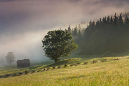 Beautiful summer landscape at the forest edge