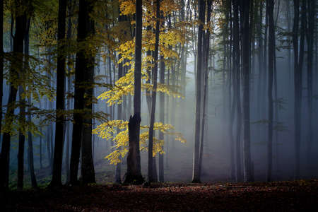 Autumn landscape of a beautiful forest Reklamní fotografie - 88372917