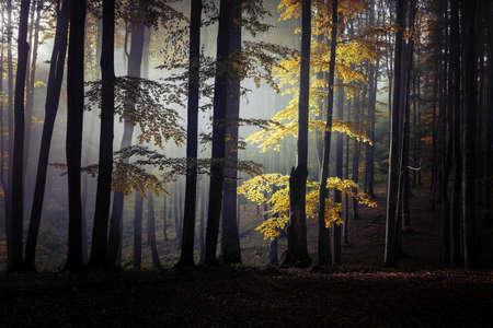 Autumn landscape of a beautiful forest Reklamní fotografie - 88372925