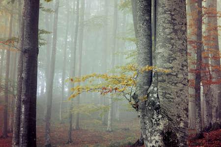 Autumn landscape of a beautiful forest Reklamní fotografie - 88372926