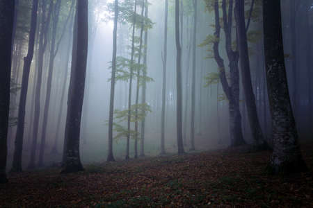 Autumn landscape of a beautiful forest Reklamní fotografie - 88372932
