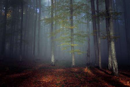 Autumn landscape of a beautiful forest Reklamní fotografie - 88372934