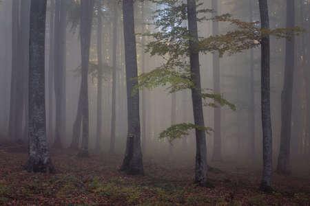 Autumn landscape of a beautiful forest Reklamní fotografie - 88373051
