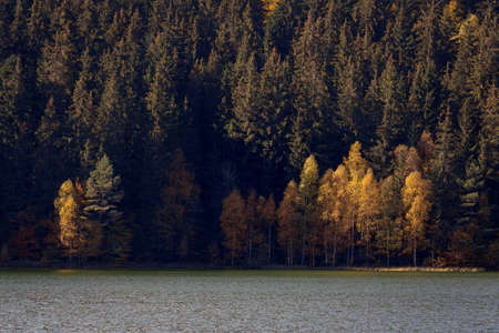 Autumn landscape of a beautiful forest Imagens - 88372995