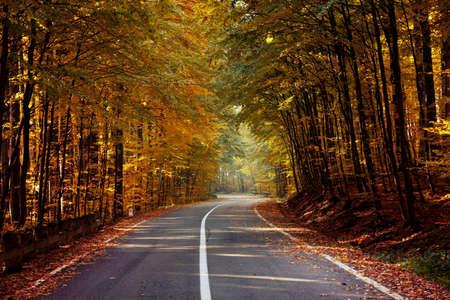 Autumn landscape of a beautiful forest Reklamní fotografie - 88373006