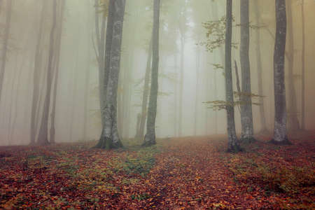 Autumn landscape of a beautiful forest