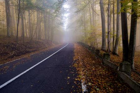 Autumn landscape of a beautiful forest Reklamní fotografie - 88373011