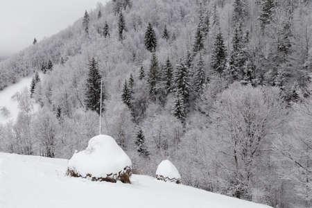 トランシルバニアの冷ややかな森の冬の風景