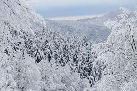 Winter landscape of the frosty forest, in Transylvania