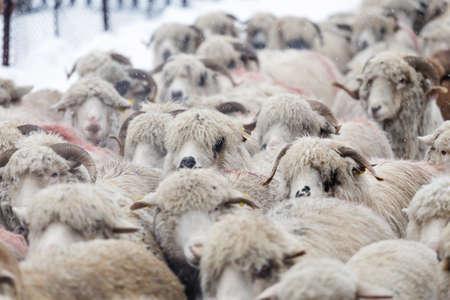 Rural landscape of the romanian sheepfold, at Sibiu county Фото со стока - 98730613