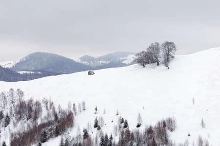 Winter landscape of the frozen forest