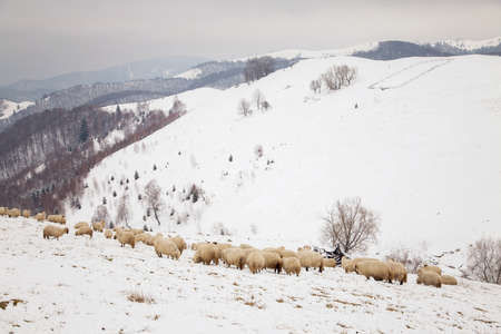 Rural landscape of the romanian sheepfold, at Sibiu county