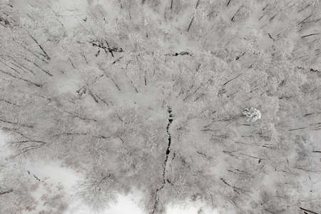 Aerial view above the frozen forest