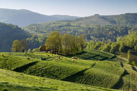 Beautiful summer sunrise in Transylvania 版權商用圖片