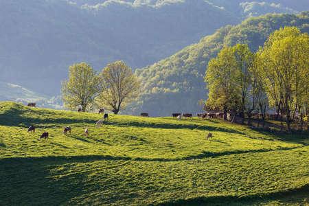 Beautiful summer sunrise in Transylvania Banco de Imagens