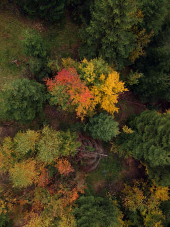 Autumn aerial view above the colorful forest Banco de Imagens