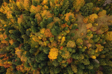 Autumn aerial view above the colorful forest Stockfoto