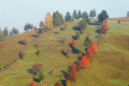 Autumn aerial view above the colorful forest Stock Photo