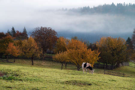 Foggy autumn morning above the traditional romanian cottages Foto de archivo - 116784180