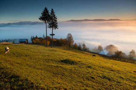 Foggy morning in Bucovina. Autumn colorful landscape in the romanian village