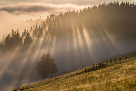 Summer sunrise at the forest edge, in Transylvania