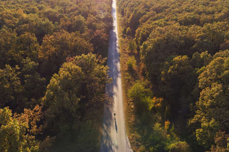 Aerial view over the colorful forest, in autumn