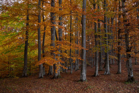 Autumn landscape of the beautiful, colorful forest