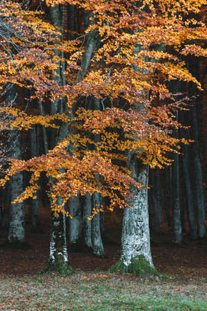 Autumn landscape of the beautiful, colorful forest Stock fotó